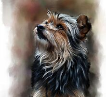 Shaggy pet dog portrait by Michael Greenaway