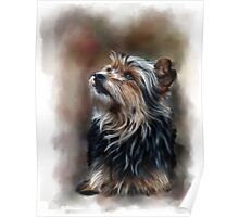 Shaggy pet dog portrait Poster
