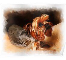 Cute pet dog portrait Poster