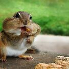 Addicted to Nuts by Lori Deiter
