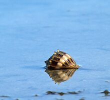 A lonely shell by jozi1