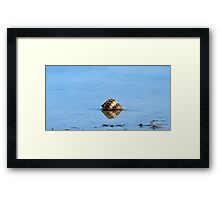 A lonely shell Framed Print