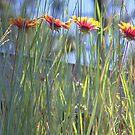 Wild Flowers by Auzriell