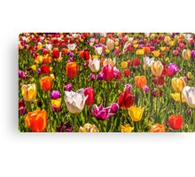 Colourful Tulips at the Conservatory Gardens Metal Print
