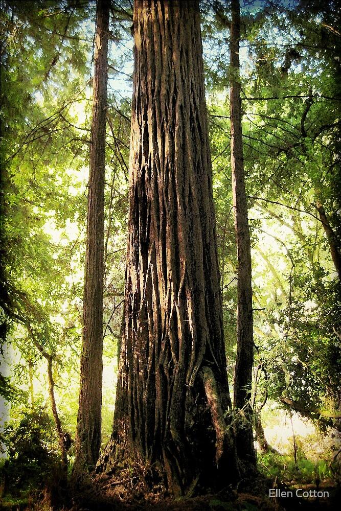 Redwood Family by Ellen Cotton