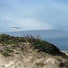 Beach Serenity by Ellen Cotton