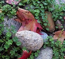 Rock, Clover, red maple leaf by anishell