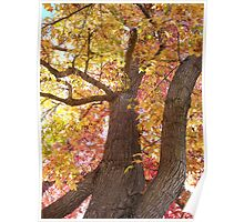 Maple Tree on Fall Poster