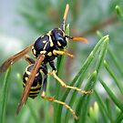 Yellow Jacket by bruxeldesign