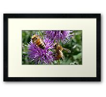 Bumble & Bee Framed Print