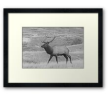 Walking Bull Framed Print
