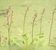 Rodgersia Dream by Sarah-fiona Helme