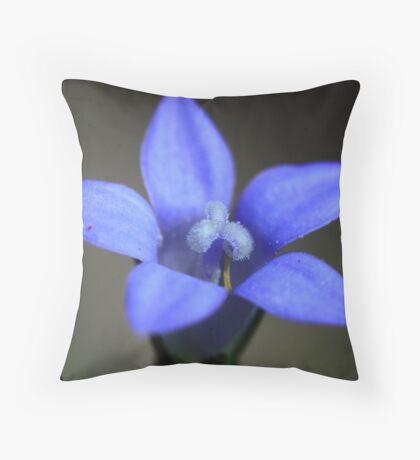 Wahlenbergia gracilis  Throw Pillow
