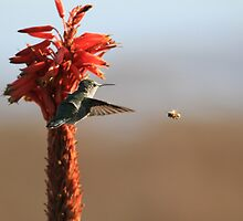Hummer vs. Bee by DARRIN ALDRIDGE