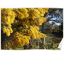 Wattle by the Gate Poster