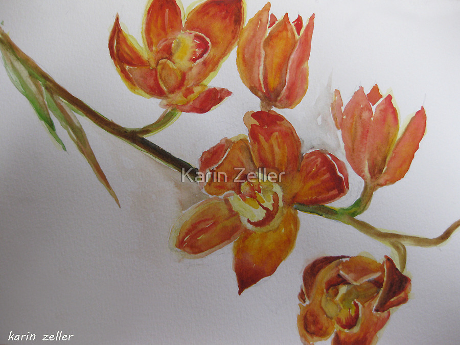 Orchids watercolour by Karin Zeller