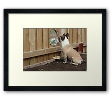Checking on the Neighbours Framed Print