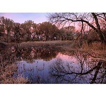 Tree Surround Photographic Print