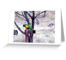 Bush Rainbow Greeting Card
