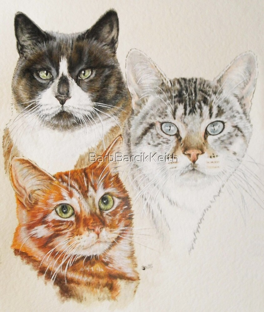 American Shorthair by BarbBarcikKeith