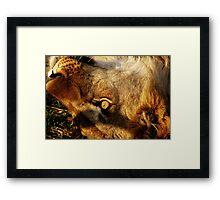 Etosha Framed Print