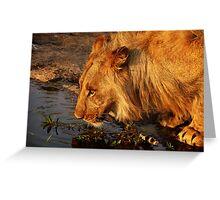 Lion's Pride Greeting Card