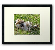 Foxy wth fur flyin' Framed Print