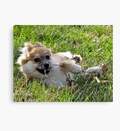 Foxy wth fur flyin' Canvas Print