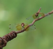 Dragonfly Conversation by Tracy Faught
