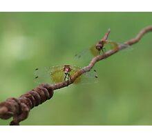 Dragonfly Conversation Photographic Print