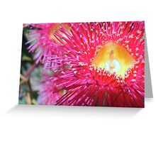 Red Flowering Gum - Western Australia Greeting Card