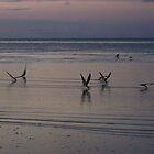 skimming by by tamarama