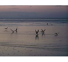 skimming by Photographic Print