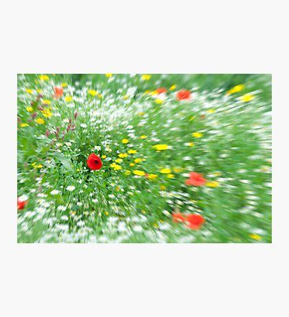 Red & Yellow & Green &....White! Photographic Print
