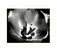 BW Tulip #11 Art Print