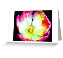 Multi-colour Pop Tulip #5 Greeting Card