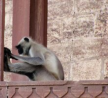 Caught in Action - Yoga Monkey - India by monkeybusiness