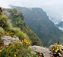 Simien Mists by Karen Millard