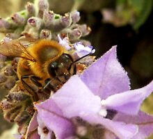 Bee What You Want To Bee. by Toni Kane
