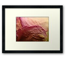 All Dried Up Framed Print