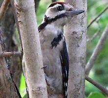 Woodpecker On The Watch by ArtOfE