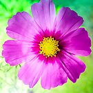 Cosmos Sensation in Back Light by 7horses