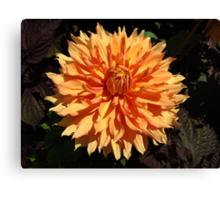 The benefit of Orange Canvas Print