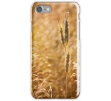 Golden cereal plant photo iPhone Case/Skin
