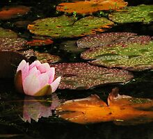 Waterlily in a rainy day by Shienna