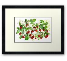 Ripe Strawberries from Provence Framed Print