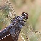Dragonfly By Pond by SusieG
