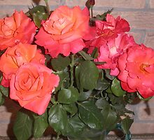rose del mio giardino....italy - Europa - VETRINA RB EXPLORE GIUGNO 2014 by Guendalyn