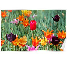 Tulips For Spring Poster
