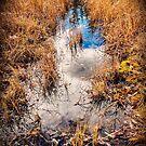 Relection of sky in MacIntyre Creek by Yukondick